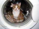 kot_w_pralce